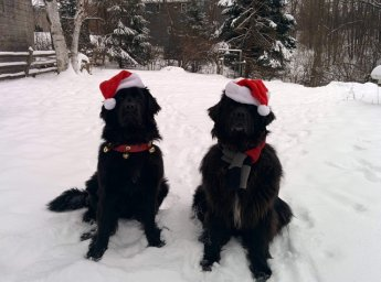 Гламурно и по-новогоднему