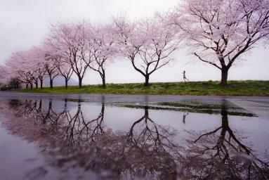 Rain of spring.