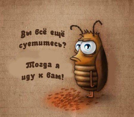 Гадание на проблему таракан