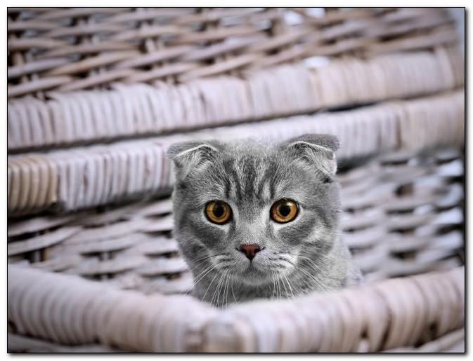 Как Рабинович кошку продавал или грамотный маркетинг