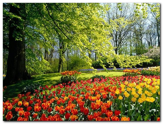 красивые картинки на рабочий стол природа цветы № 511993 без смс