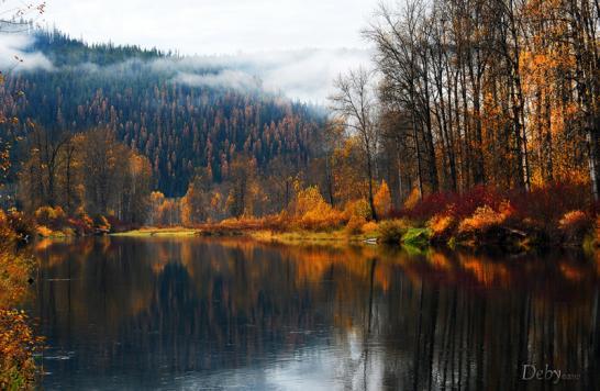 Осень пришла в лес