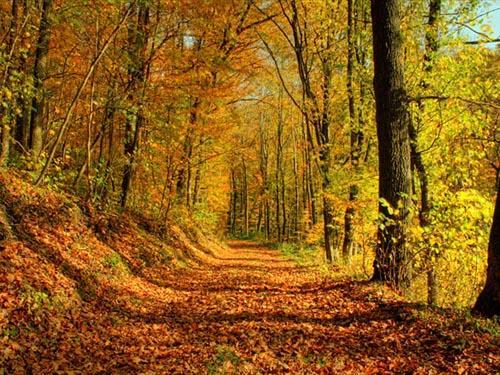 Парк осенью