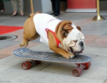 Крутой собака!