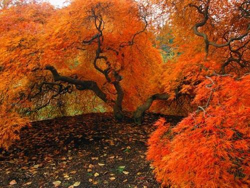 Дерево раскрашенное осенью