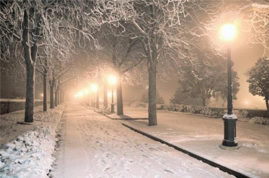 Алея парка зимой