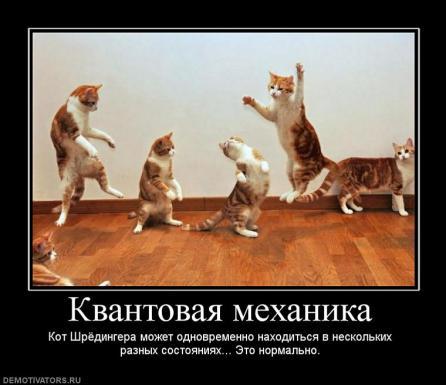 Коты Шрёдингера